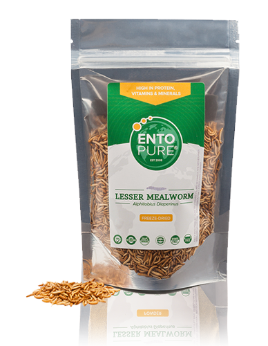 Edible Insects - Buffalworms