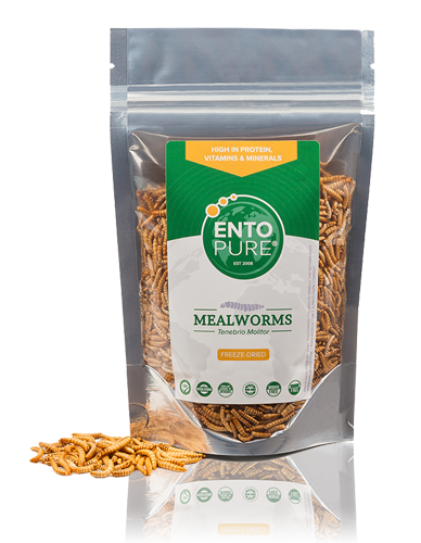 Edible Insects - Mealworms